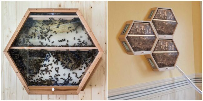 Genius Company Installs Beehives In Your Living Room So You Can Help Save Them