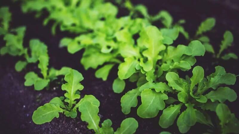 15 Healthy Plants to Grow in Your Victory Garden