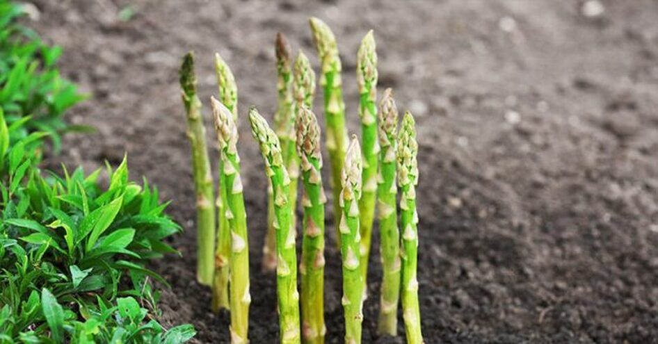 Plant Once, Pick Forever! 10 Perennial Vegetables You Need To Plant This Summer